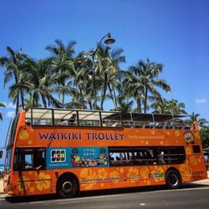 Waikiki Trolley with palm trees in the background